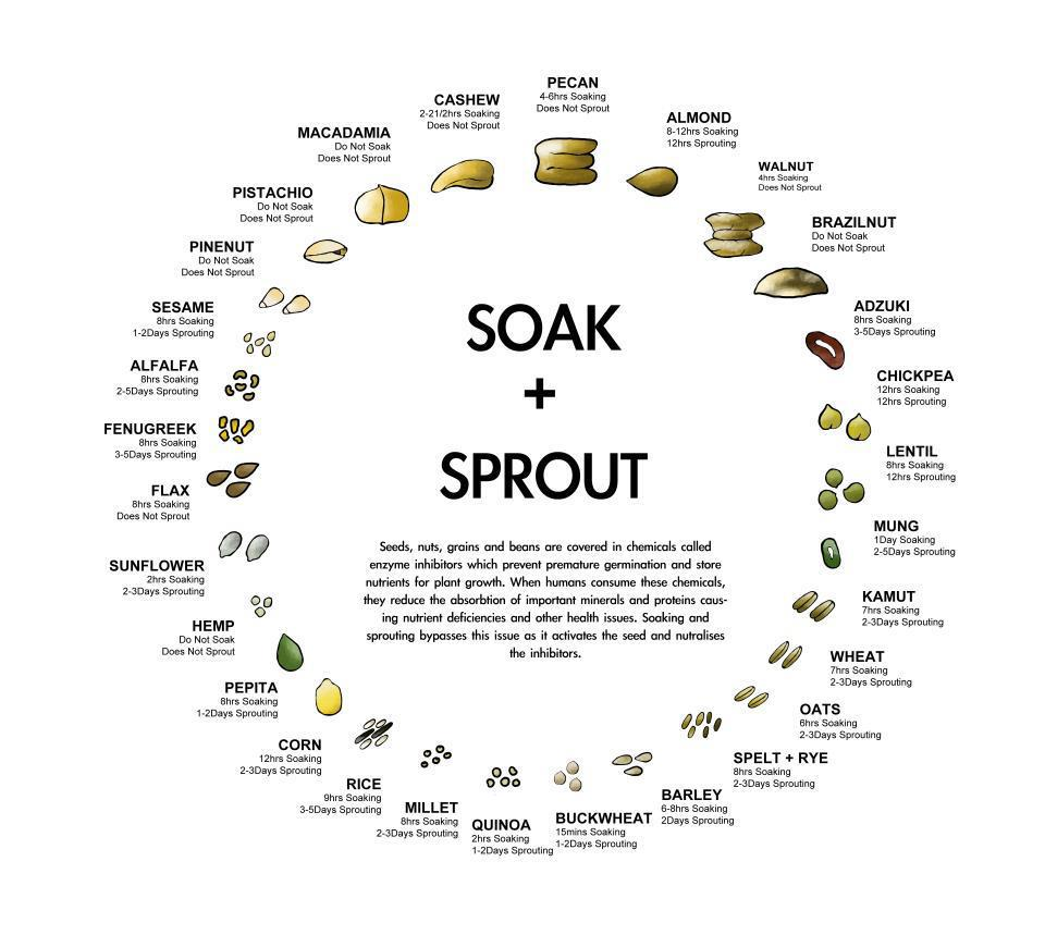 soaksprout1